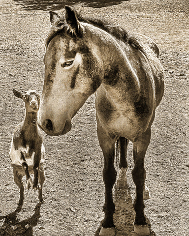 Me and My Best Buddy Sepia Metal Print