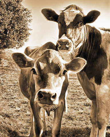 Mom and Calf Sepia