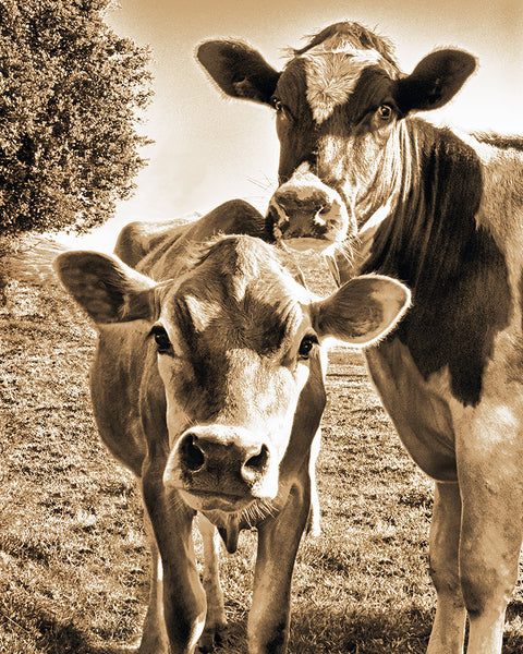 Mom and Calf Sepia Metal Print