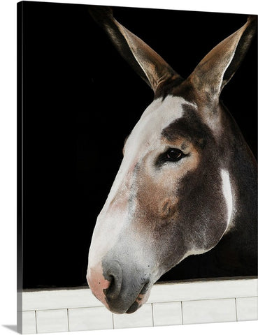 Beautiful Long Ears Canvas