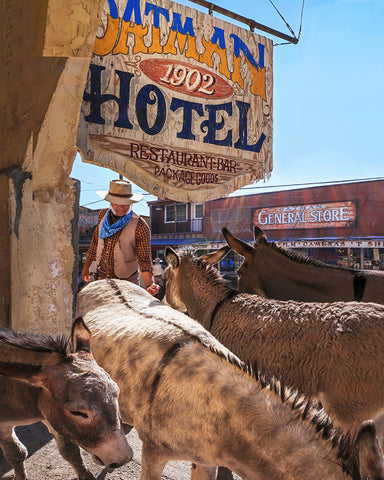 Oatman Donkeys, Arizona