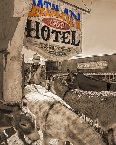 Oatman Donkeys Sepia, Arizona