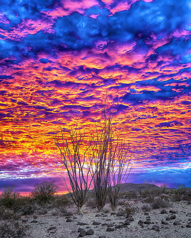 Ocotillo Sky, Arizona