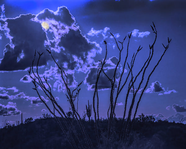 Sonoran Desert Moonscape, Arizona Standard Art Print