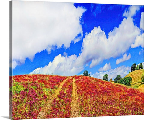Over the Hill, Springtime Bloom, California Canvas
