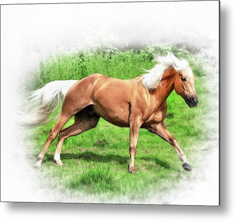 Palomino Run Metal Print