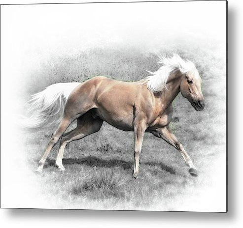 Palomino Run Sepia Metal Print