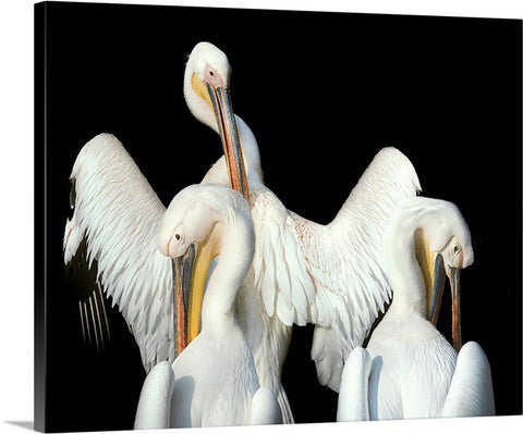 White Pelicans Canvas