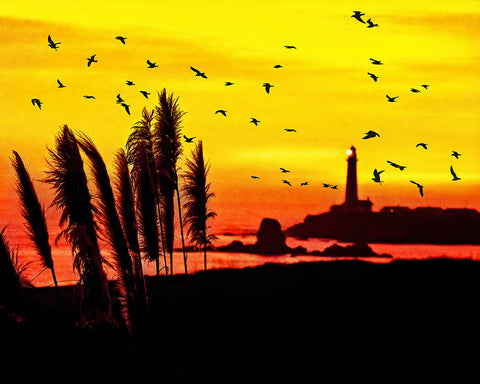 Pigeon Point Lighthouse Sunset Standard Art Print