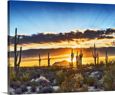 Saguaro Sunrise Canvas