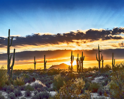 Saguaro Sunrise, Arizona