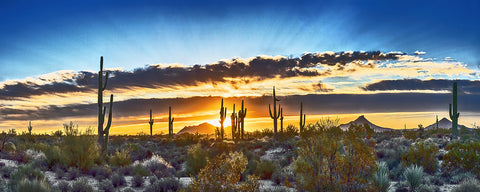Saguaro Sunrise Panoramic Metal Print