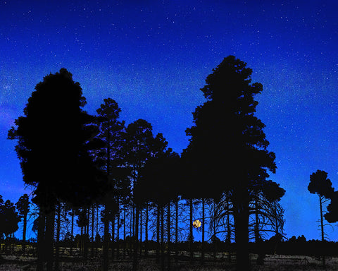 Full Moon Through the Trees, Mogollon Rim, Arizona Metal Print