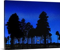 Full Moon Through the Trees, Mogollon Rim, Arizona Canvas