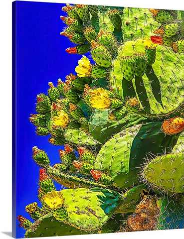 Prickly Pear Bloom Canvas