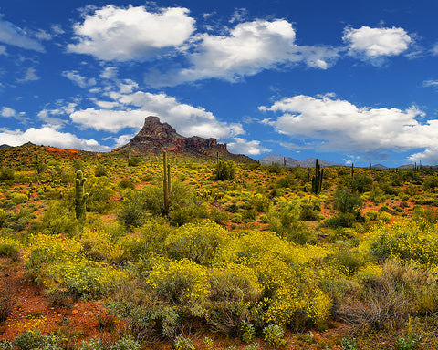 Red Mountain Springtime Standard Art Print