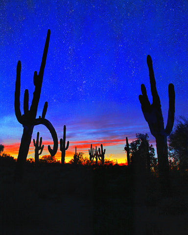 Saguaro and Stars, Arizona