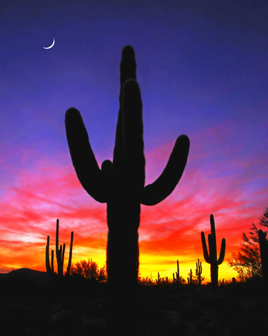 Saguaro and Crescent Moon Metal Print