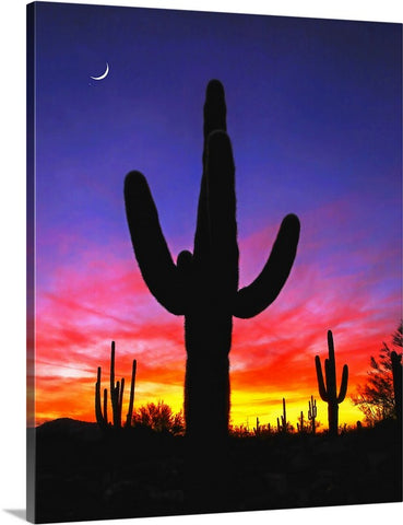 Saguaro and Crescent Moon Canvas