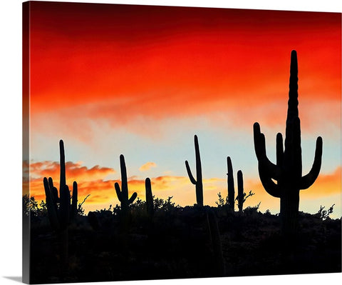 Saguaro Ridge Canvas