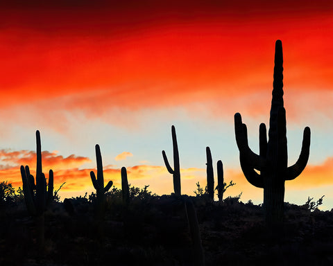 Saguaro Ridge Metal Print