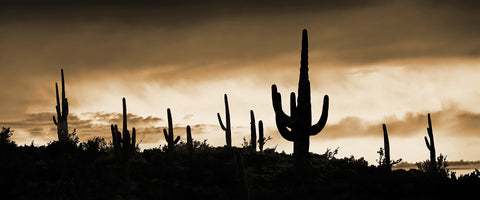 Saguaro Ridge Sepia, Arizona Panorama Metal Print