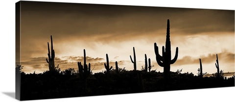 Saguaro Ridge Sepia, Arizona Panorama Canvas