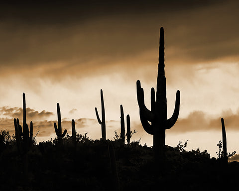 Saguaro Ridge Sepia, Arizona