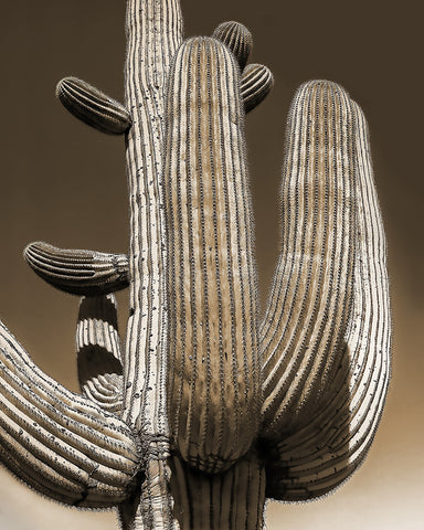 Saguaro Closeup, Arizona Standard Art Print