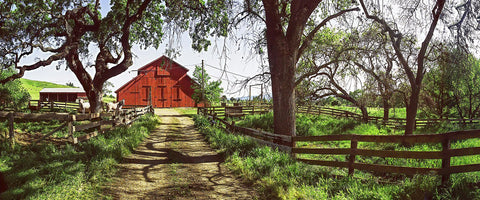 Horse Barn Panoramic Standard Art Print