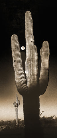 Saguaro Moon Sepia, Arizona Panoramic Metal Print