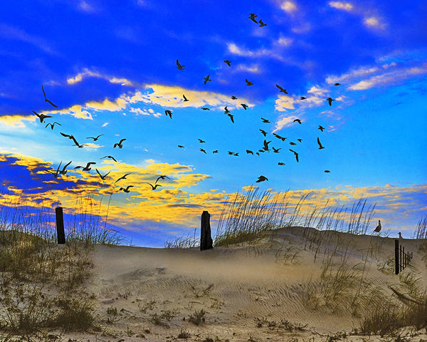 Dunes, Grass and Gulls, Sunrise, South Carolina Standard Art Print