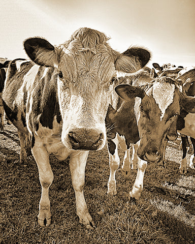 Show Me Your Moo Moo Sepia
