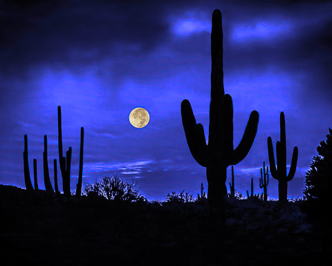 Full Moon and Saguaros, Sonoran Desert Metal Print