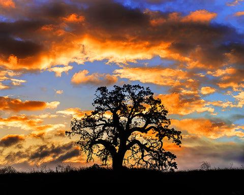 Sunrise Oak Horizontal Metal Print