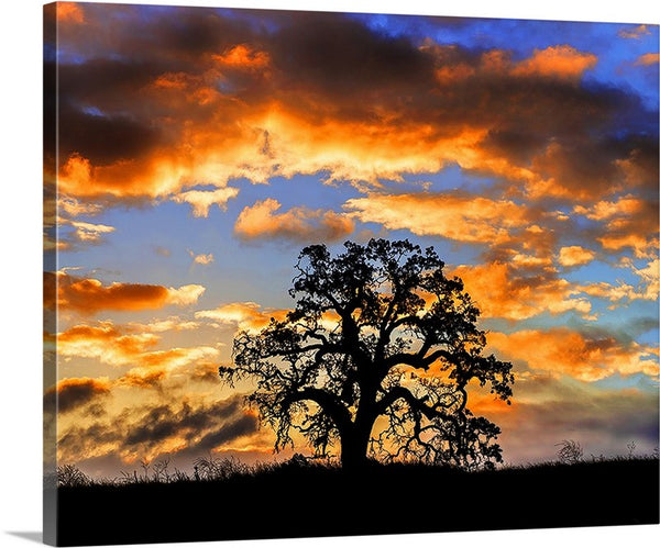 Sunrise Oak Horizontal Canvas