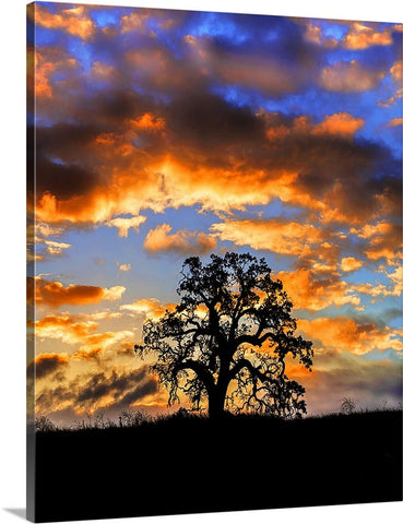 Sunrise Oak Vertical Canvas