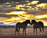 The Meeting, Wild Horses Metal Print