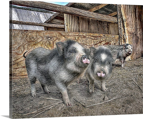 Three Little Piggies Canvas