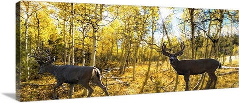 Through the Forest Panoramic Canvas