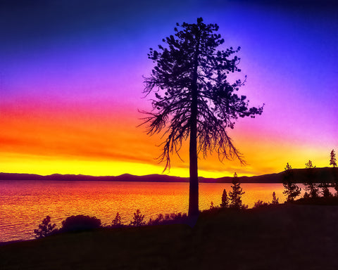 Tree Lake Sunset Standard Art Print