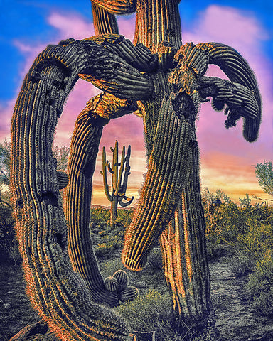 Twisted Saguaro Metal Print