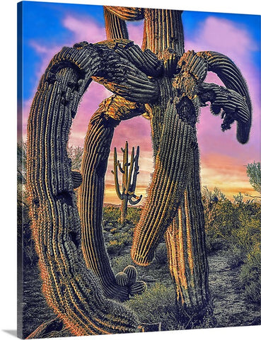 Twisted Saguaro Canvas