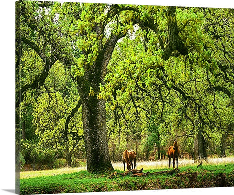 Under the Trees Canvas
