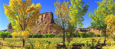 Autumn Color, Red Rock and Green Meadow Panoramic Standard Art Print