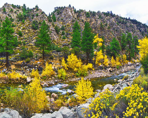 Autumn River, Walker River CA/NV Standard Art Print