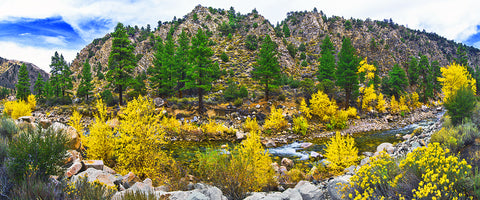 Autumn River, Walker River CA/NV Panoramic Metal Print
