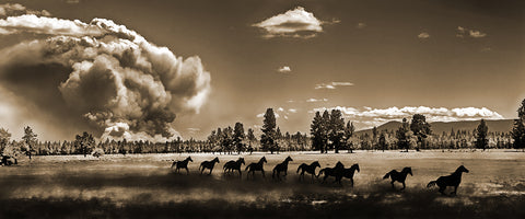 Wild Horse Fire Sepia Panoramic Metal Print