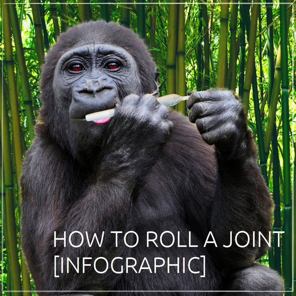 How to Roll a Joint [Infographic]