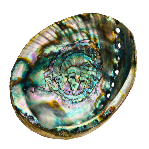 Abalone Shell with Chips (Clearance)